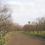 木々の芽が膨らみ始めた 郷土の森の梅園