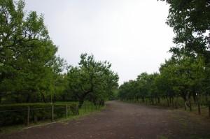 盛夏の梅園  ~府中市 郷土の森