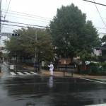 10月の雨の日。大いちょうの木は雨を喜んでいるか?