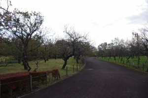 11月上旬、葉が落ちて枝の形が目立つようにたった