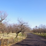 青空の郷土の森の梅園