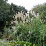郷土の森の池ではススキの穂が伸びていた