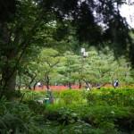 郷土の森にある梅園のうちのひとつではヒガンバナが盛りを迎えていた