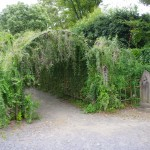 郷土の森の萩のトンネル 入口