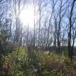 冬の朝の浅間山に朝日が射す