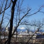 木々を通して見た富士山