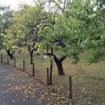 梅園は落葉が始まった木も