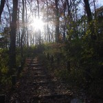 葉が落ちた木々を通して見た冬の太陽